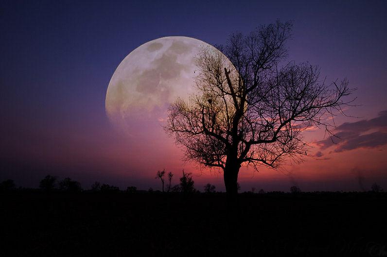 Bienvenidos al nuevo foro de apoyo a Noe #238 / 24.03.15 ~ 27.03.15 - Página 38 La-luna-y-el-arbol-moon-and-tree