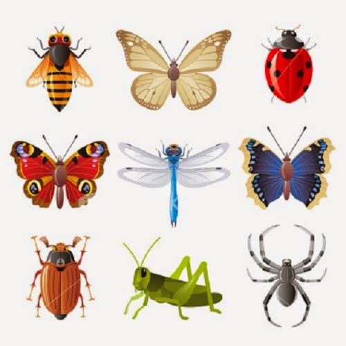 كيف تتنفس الحشرات M3N4NET-113902-1