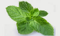 15 Plants and Herbs That Can Boost Lung Health, Heal Respiratory Infections And Even Repair Pulmonary Damage Peppermint-14