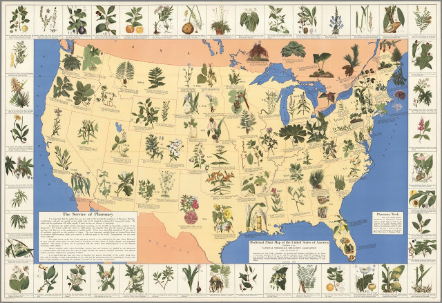 Amazing 1930's Pharmacist Map of 'Herbal Cures' Released to Public  LgMedicinalPlants