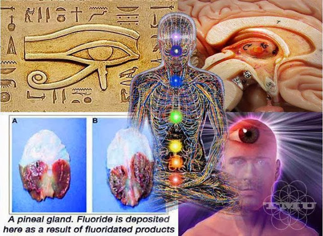 Proof That the Pineal Gland is Literally A 3rd Eye Pineal-gland