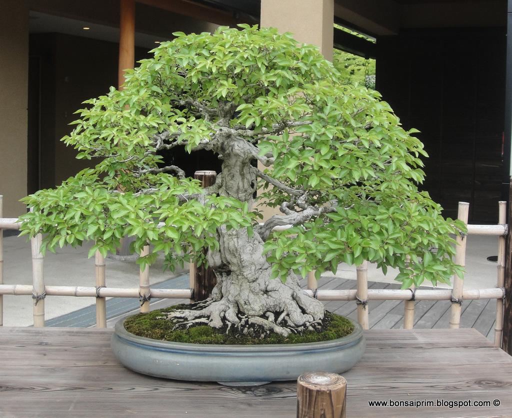 The Omiya Bonsai Art Museum, Saitama DSC09328