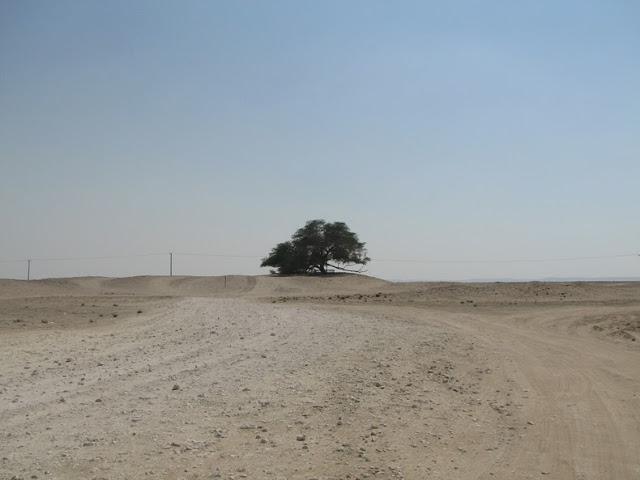 El Árbol de la Vida en el desierto de Bahrein 270573780_a97b3ca6ba_b