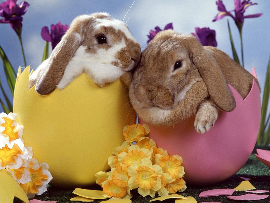 Easter Blessings Easter-bunny