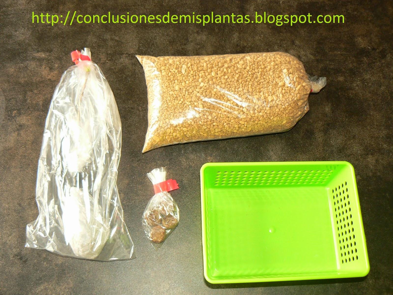 """Os presento....mi nuevo kit """"Bonsai Zero Ginkgo Biloba"""" P1190141"""