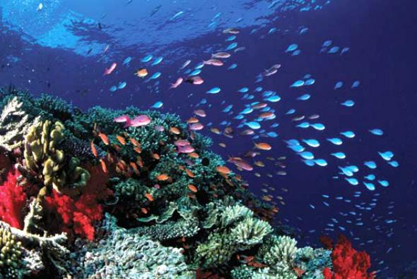 உலகின் அழகிய இயற்கை பிரதேசங்கள்! Great-Barrier-Reef