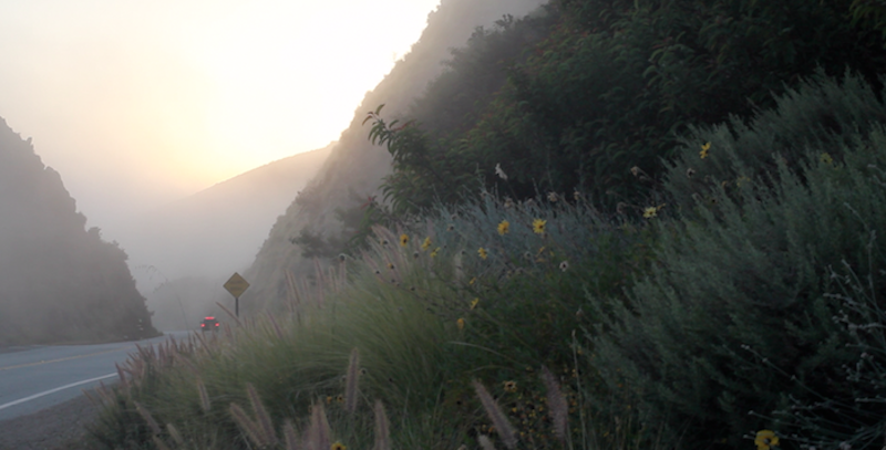 California Flowers%2521