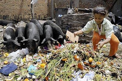 لماذا يحرم الله اكل الخنزير Z1