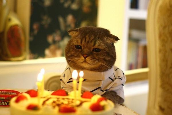 Feliz Aniversário RD12 Gato_aniversario_tedio