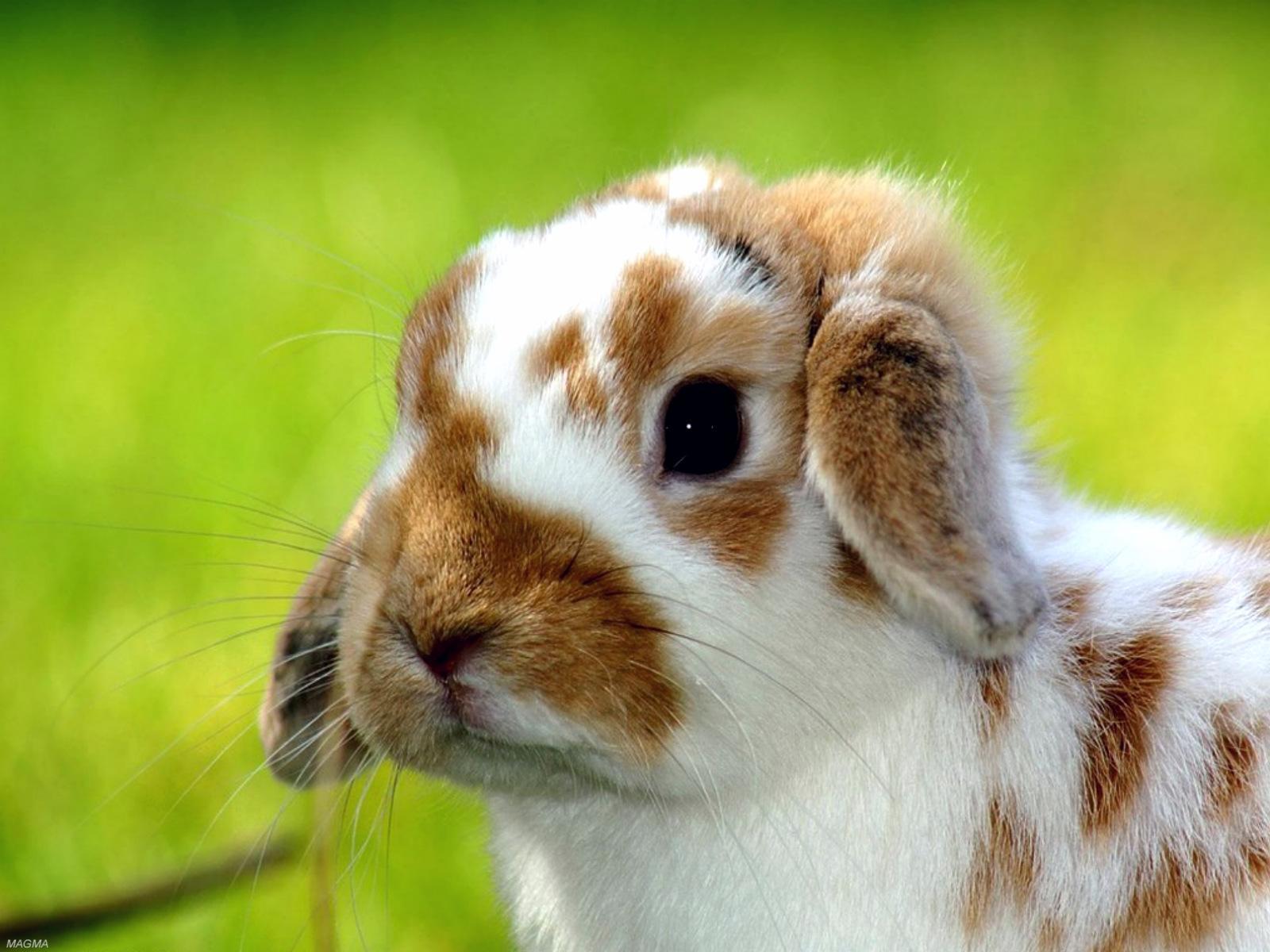 Une très belle photo par jour et par membre - Page 2 Animals-pictures-cute-rabbit