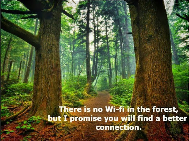 Walk in the Forest to Heal Oneself Forest-bathing-health-benefits