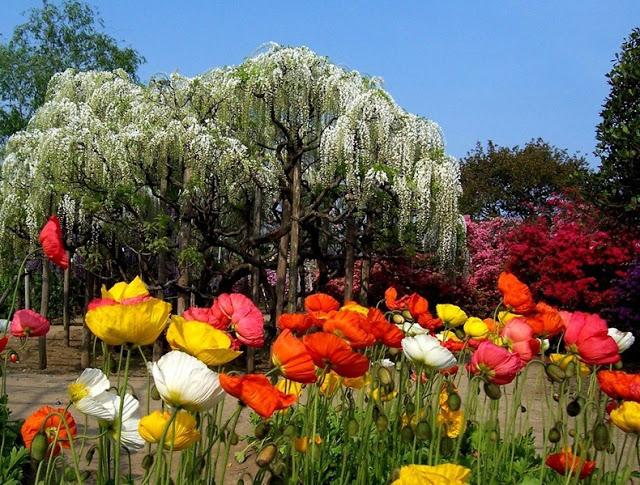 حديقة زهرة الحب في اليابان 10
