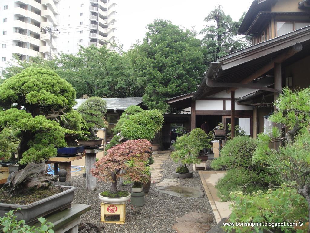 Визит в Shunka-En DSC09083