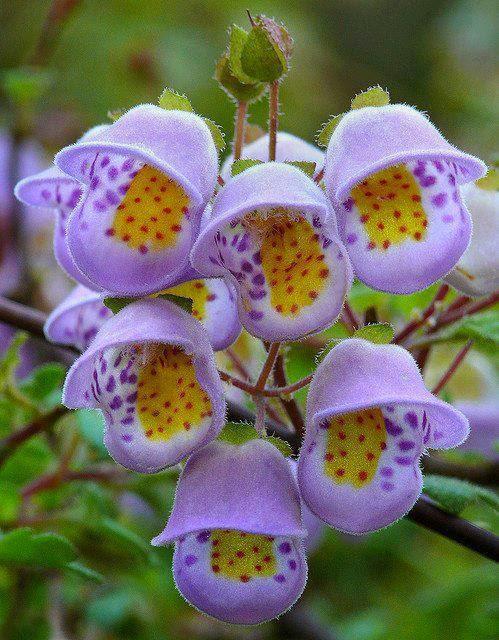 Magično cveće! Untitledattachment00025