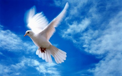 Высказывания о Боге - Страница 2 Pigeon