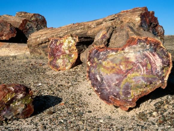أشجار تحمل أسرار الماضي Petrified-Forest-National-Park-Arizona-580x435