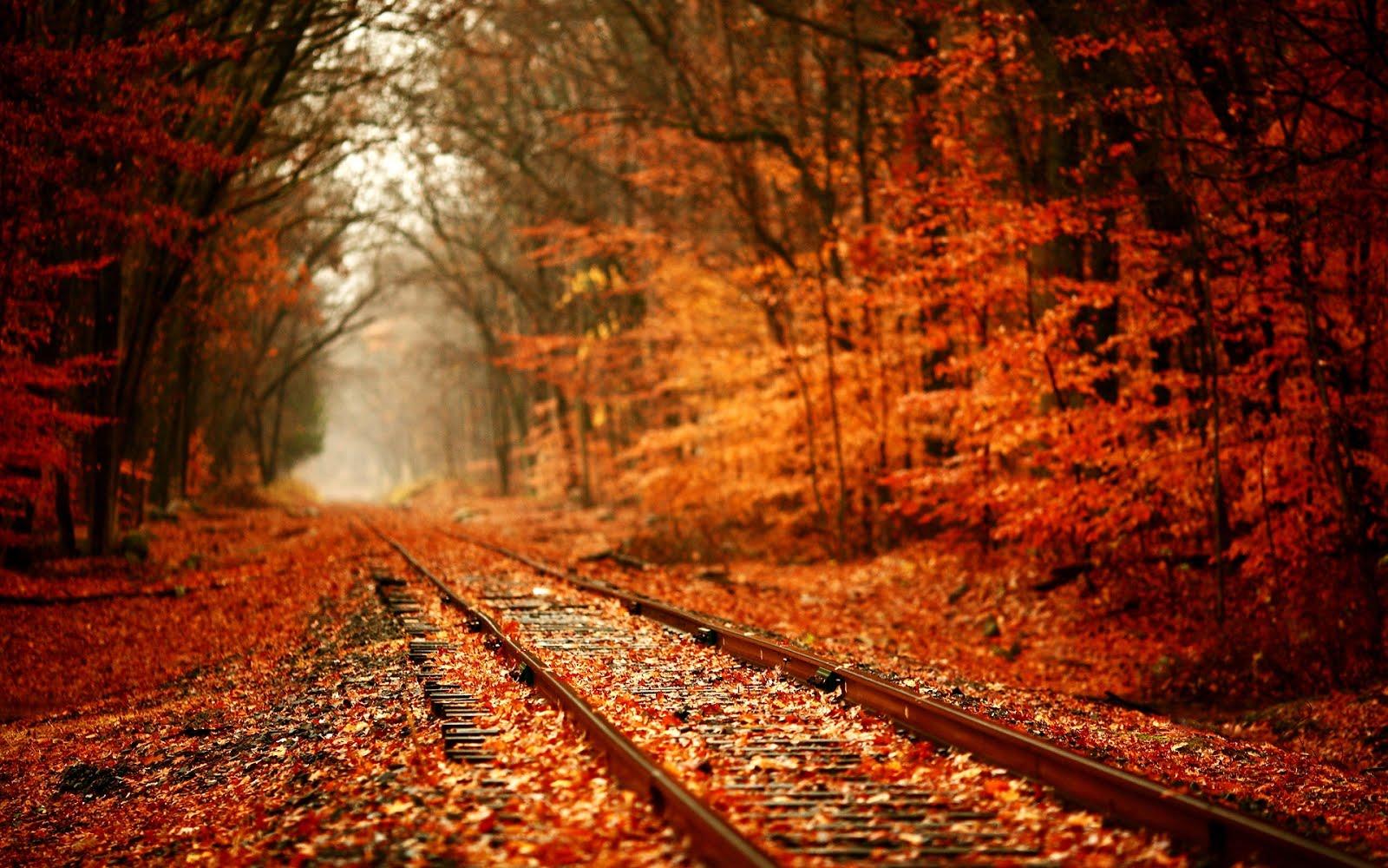 UN DESCANSO EN EL CAMINO - Página 39 Leaves-over-railway-1920x1200-wallpaper-recuerdos-de-oto%25C3%25B1o-autumn
