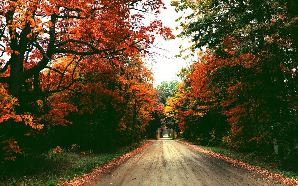... Y caen las hojas, llega ....¡¡¡ EL Otoño !!! - Página 8 Tumblr_muc4umXlxT1svrh8zo1_1280
