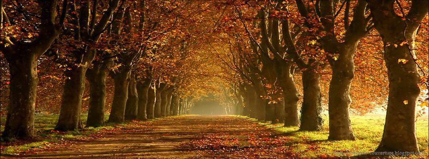 Le secret des arbres Couverture-facebook-automne_03
