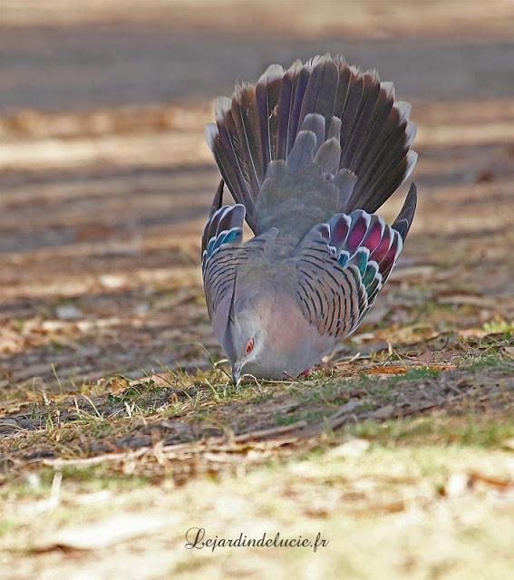 Oiseau de Martine 09/02/2015 trouvé par Ajonc Parade
