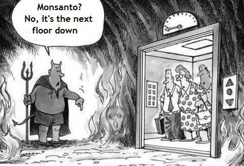 Internal Documents Reveal Monsanto Knew For Years Their Products Damaged Farms 579872_10151113386558718_1848067483_n