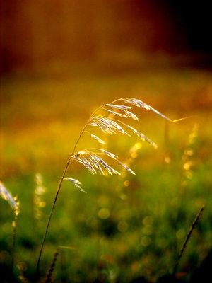 thụy - Lãng mạn của Gió với Nắng... Gio