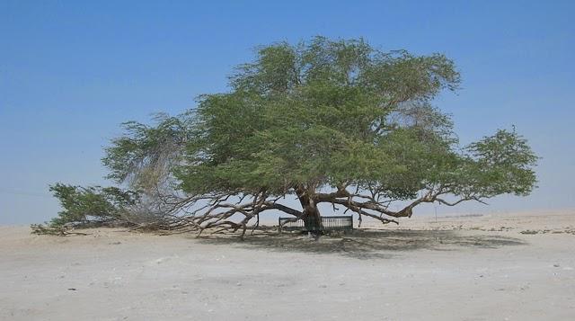 El Árbol de la Vida en el desierto de Bahrein 01_bee-1
