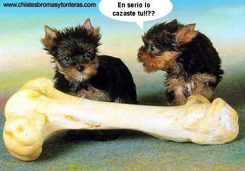 imegens XDD Imagenes-chistosas-animales-perros