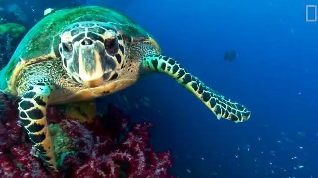 Marine Biologist Discovers the First Biofluorescent Sea Turtle 980x