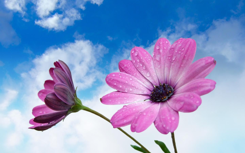 வால்பேப்பர்கள் ( flowers wallpapers ) 01 - Page 2 3460-photography_flowers_wallpaper