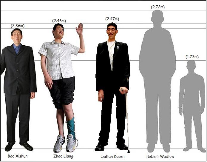 ¿Cuánto mide Robert Wadlow? - Altura - Real height Comp