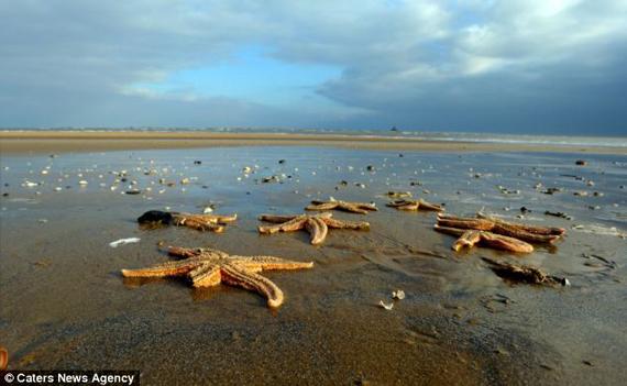Étrange pluie le 1 Janvier 2011 - Page 16 Starfish02