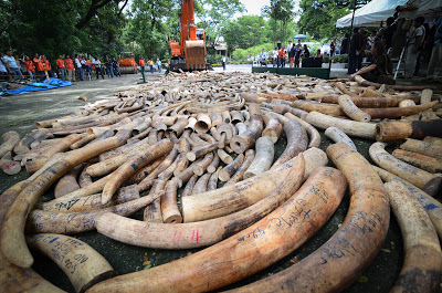 Is This Really Who We Are? 500-ivory%2Bpoaching