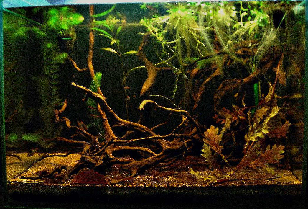 Aquarium 54L, le commencement Bac_face_2_2
