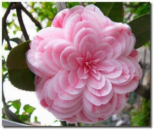 Magično cveće! Untitledattachment00034