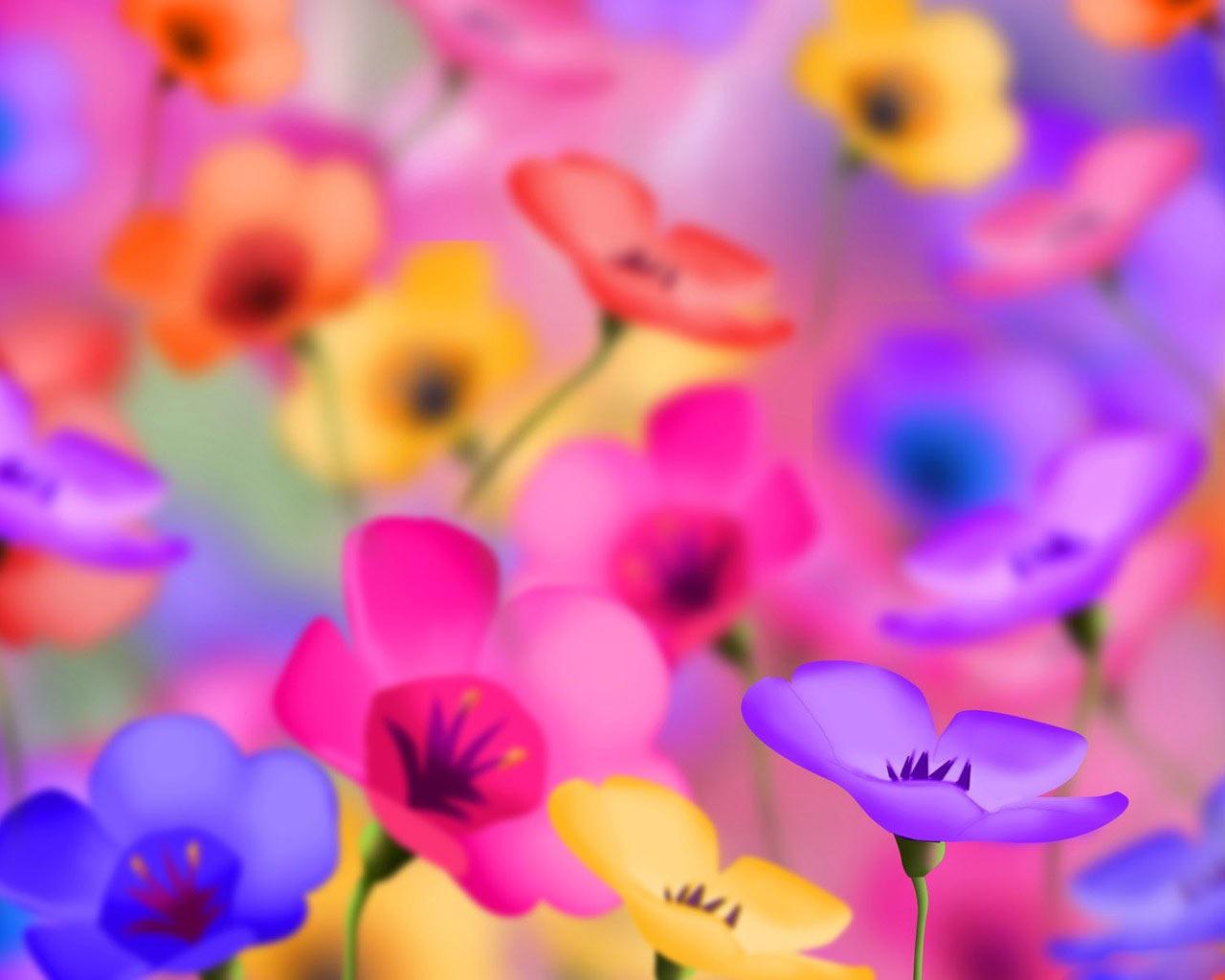 வால்பேப்பர்கள் ( flowers wallpapers ) 01 Colorful_Flowers_desktop_backgrounds_pictures