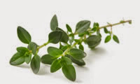 15 Plants and Herbs That Can Boost Lung Health, Heal Respiratory Infections And Even Repair Pulmonary Damage Thyme-5