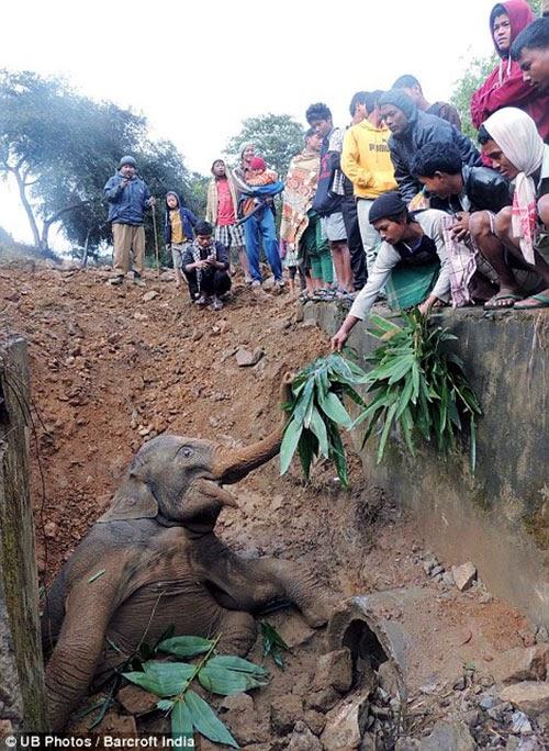 كيف تخرج فيل من حفرة A4