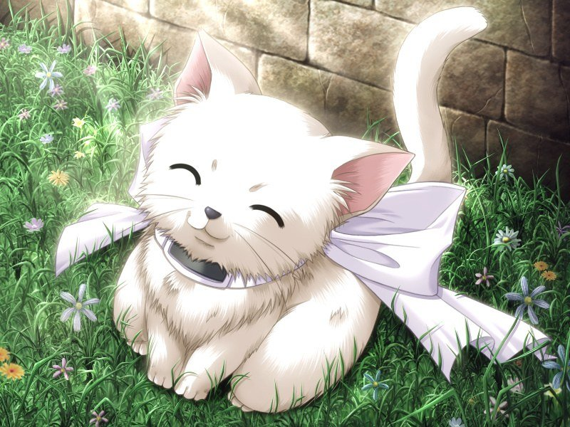 The test of Calin - The Cat Eater Anime_kitty