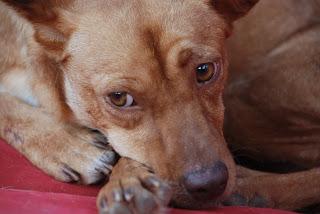 Tiere in Spanien - aus dem Blogspot kopiert DSC_0741