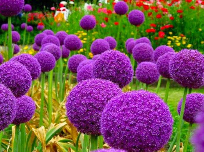 Magično cveće! Untitledattachment00037