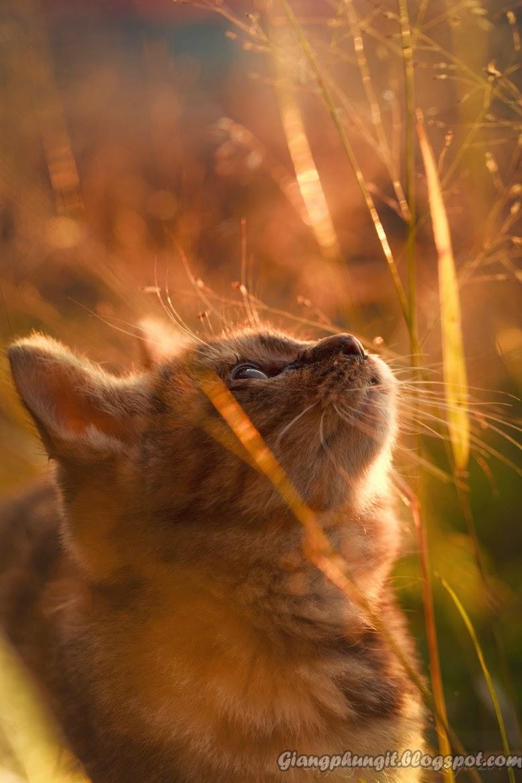 Album ảnh về chú mèo đáng yêu Anhmeo4
