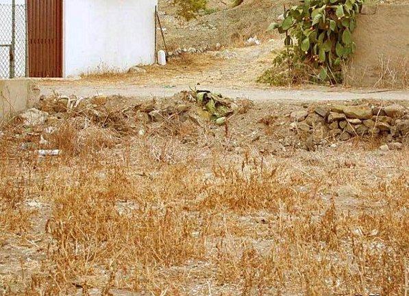 Onde está o gato? Camouflage-chat-illusion