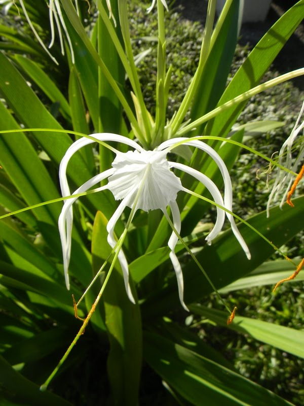 Qui connait cette jolie fleur ? DSCN1894