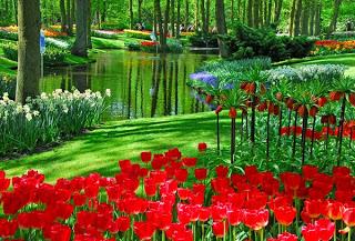 أكبر وأجمل حديقة أزهار في العالم والتي يزرع فيها 7 ملايين زهرة كل عام Z1