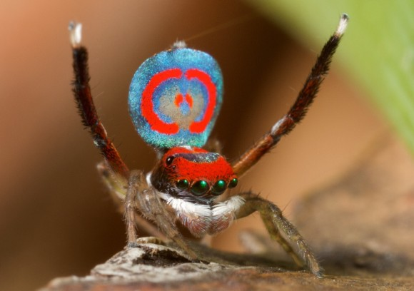 اجمل عنكبوت فى العالم Image033-580x408