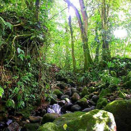 مناظر روعه في البرازيل Rainforest-2