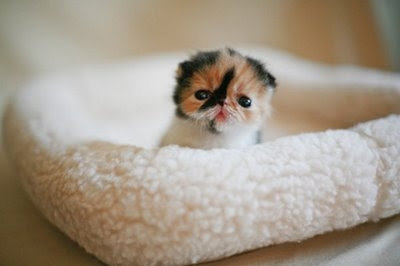 cuteness is in the air.... Cute-cat-baby-picture-photos