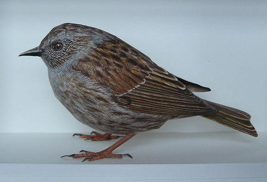 فنان يصنع طيور من الورق واقعية بشكل لا يصدق  Papercraft-birds7%5B1%5D