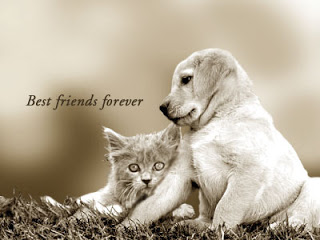 Volim te kao prijatelja, psst slika govori više od hiljadu reči - Page 5 Best-friends-forever